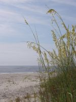 Sea Oats as Frame by redtailhawker