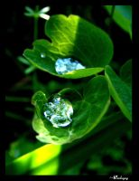 Clear drops like diamonds II by darkcyny