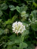 Clover 2 by Junko-Ishi
