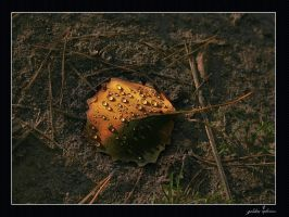 autumn jewel by 77photons