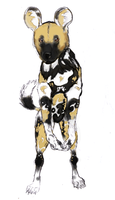 African Wild or Painted Dog by AnAgnosticGod