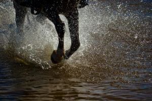 galop by poivre