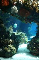 Aquarium Stock 30 by Malleni-Stock