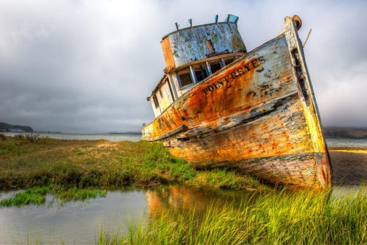 The permanent resident | Point Reyes, California by alierturk