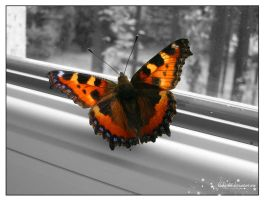 butterfly by klakier666