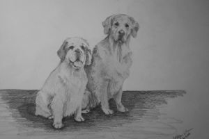 golden retriever and clumber spaniel by maaart90
