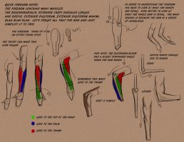 Intro to Forearm by BADARTHELPCENTER