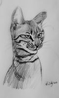 mandatory daily cat sketch 752 by nosoart