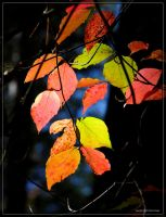 Leaves 40D0028379 by Cristian-M