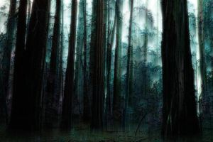 Deep within Darkfall Forest by howling-gold-fox