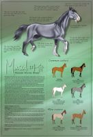 The Masul Horse Breed by AliceYung