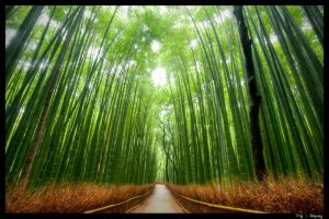 Bamboo Forest, Kyoto by Kaboose-18