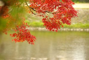 Autumn tint of river edge by ganessa