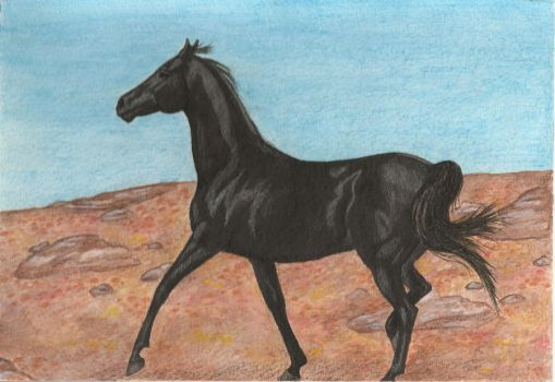 The Black Horse by Anethea