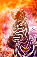 Zebra in Colour by SaqqaraBird