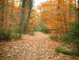 Massabesic Audubon Trails by crazygardener