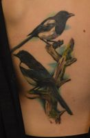 Healed Magpies by kayleytatts