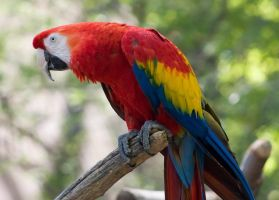 Macaw by xtwizx-Stock