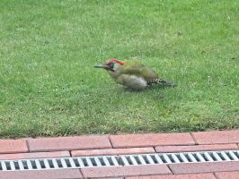 Groundpecker by AudeS