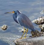 Heron on the Pond by FTSArts