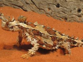 Thorny Devil by ultimalitho