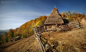 Autumn colors in Apuseni Mountains 28 by adypetrisor
