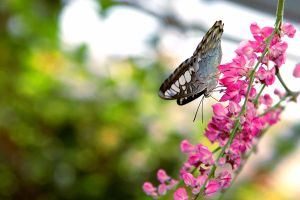 Clipper on Coral Vine by TheSleepyRabbit