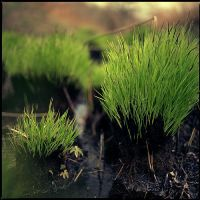 grass by wasted-photos
