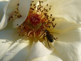 diligent bee by andi40