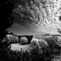 Autumn I b+w... by MichiLauke