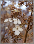 Winter dried flowers by Mogrianne