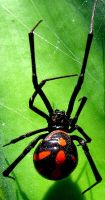 Spider 2 by FrozenMinted