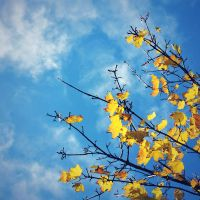 paint me blue and yellow by elalma