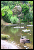 Pond Front by Tomatogrower