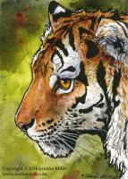 Amur Tiger Miniture Painting by Nambroth