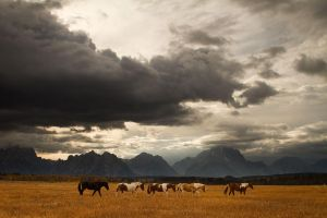 Horses and Tetons by StevenDavisPhoto
