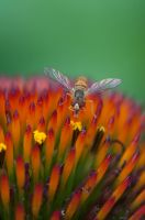 Just Pollinate'n by Machinegun-Willy