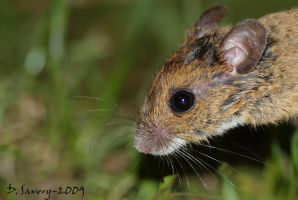 Soggy mouse Close up by Slinky-2012
