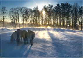 Horses in drift snow by Triumfa