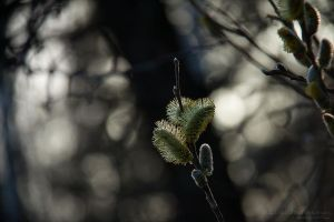An Excerpt from a Spring by rici66
