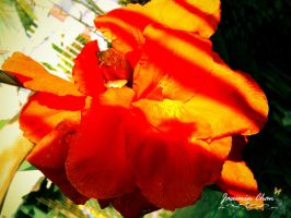 Red big flower by jasuminchan10