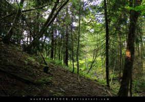 forest 004 by woodlandSTOCK