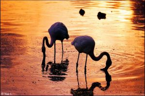 flamingo sunset 2 by Yair-Leibovich