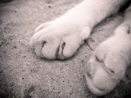 Watch My Paws by Youcef07