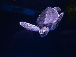 Baby Sea Turtle by greyday19