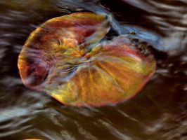 lilly pad under the Water by Nipntuck3