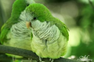 Green Birdie by MartinaPhotography