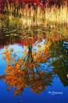 Nature Upside Down by PhotographsByBri
