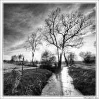 The tree near the stream by PhotoSph-Eric