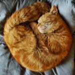 ginger pretzel by Wilithin